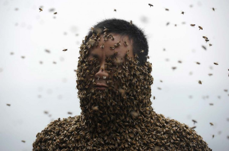 She Ping, a 34-year-old beekeeper, is seen during an attempt to cover his body with bees, in Chongqing municipality, April 9, 2014. He used queen bees to successfully attract more than 460,000 bees, weighing over 45 kg (99 lbs), within 40 minutes, local media reported. Picture taken April 9, 2014. (China Daily/Reuters)