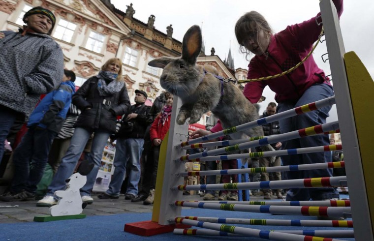 People look at a rabbit jumping over an obstacle at the traditional Easter market at the Old Town Square in Prague April 14, 2014. Holy Week is celebrated in many Christian traditions during the week before Easter. (David W Cerny/Reuters)