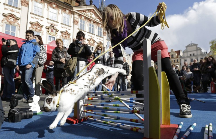 People look at a rabbit jumping over an obstacle at the traditional Easter market at the Old Town Square in Prague. (REUTERS/David W Cerny)