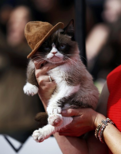 Grumpy cat arrives at the 2014 MTV Movie Awards in Los Angeles, California. (Danny Moloshok/Reuters)