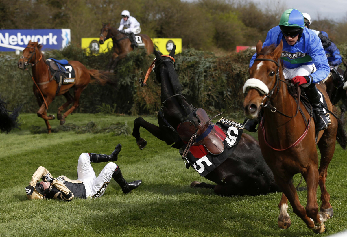 grand national race horses
