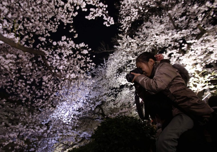 A girl riding on her father's shoulders takes pictures of illuminated cherry blossoms in full bloom along the Chidorigafuchi moats in Tokyo April 1, 2014. Many people enjoy viewing the blossoms across the country during this season. (Photo by Yuya Shino/Reuters)