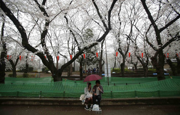 A couple hold an umbrella while having a picnic in Ueno Park, which is famous for cherry blossoms, at the beginning of the cherry blossom season in Tokyo March 30, 2014. (Photo by Yuya Shino/Reuters)