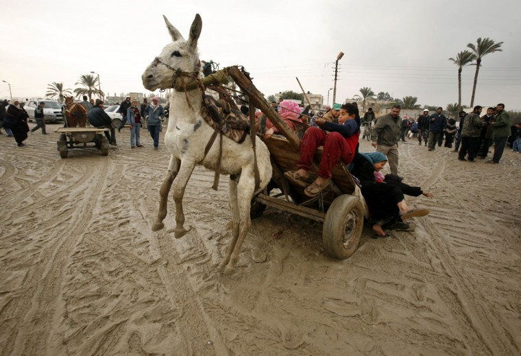 A Palestinian family falls from a donkey cart after they crossed a breach on the border wall between the Gaza Strip and Egypt on January 27, 2008. (REUTERS/Suhaib Salem)