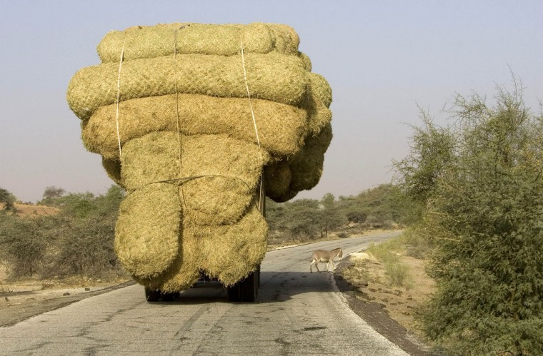 An overloaded truck carries bales of rice stalks near Rosso, as it heads for Nouakchott, Mauritania on January 30, 2008. (REUTERS/Normand Blouin)