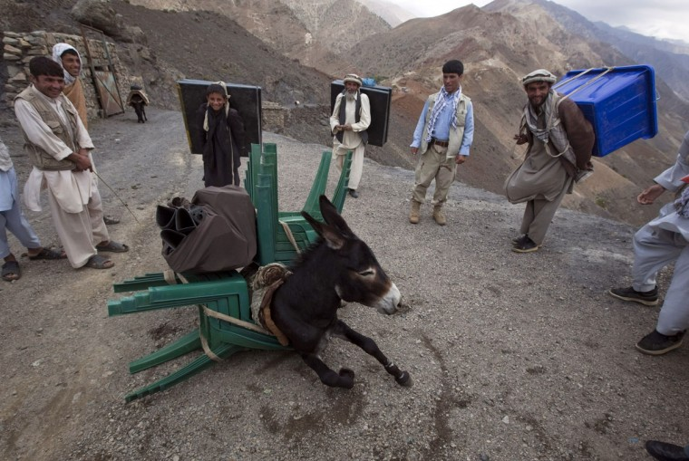 A donkey collapses after being overloaded with election materials to be transported to a village unreachable by vehicles, in Panjshir province, north of Kabul on September 17, 2010. (REUTERS/Ahmad Masood)