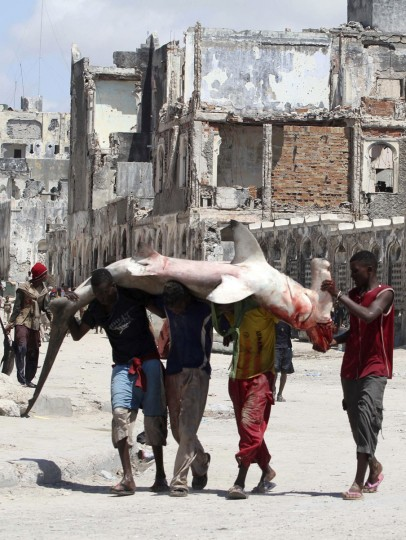 Somali fishermen carry a Hammerhead shark from the shores of the Indian Ocean in the Hamarweyne district, Somalia's capital Mogadishu, on November 4, 2011. (REUTERS/Feisal Omar)
