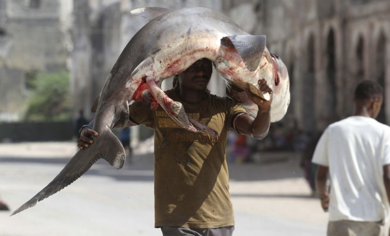 A fisherman carries a shark on his head from the Indian Ocean waters to the market in Somalia's capital Mogadishu on March 31, 2014. (REUTERS/Ismail Taxta)