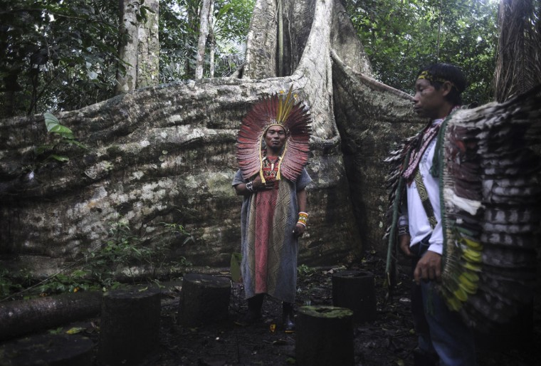 Spiritual leaders of the Huni Kui Indian tribe perform a ceremony for a sacred samauma (silk-cotton) tree outside the village of Novo Segredo along the Envira river in Brazil's northwestern Acre state. (REUTERS/Lunae Parracho)