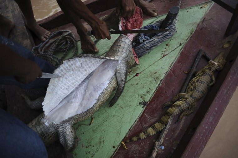 Madija Indians clean a caiman to eat, on a boat on the Envira river in Brazil's northwestern Acre state. (REUTERS/Lunae Parracho)