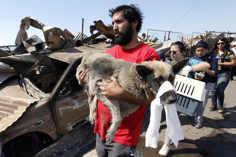 A resident carries an injured dog at the location where a forest fire burned several neighborhoods in the hills in Valparaiso. (REUTERS/Eliseo Fernandez)