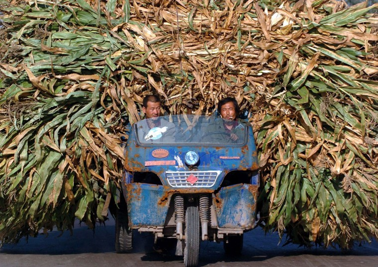 Chinese farmers transport harvested barley at a village in central Shanxi province in this picture taken September 21, 2004. (REUTERS/China Photos)