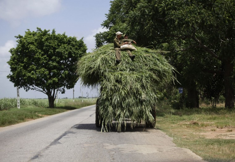 Farmers sit on a cart, loaded with fodder to feed animals, that is pulled by a tractor near Cardenas, around 75 miles from Havana, Cuba on July 22, 2013. (REUTERS/Desmond Boylan)