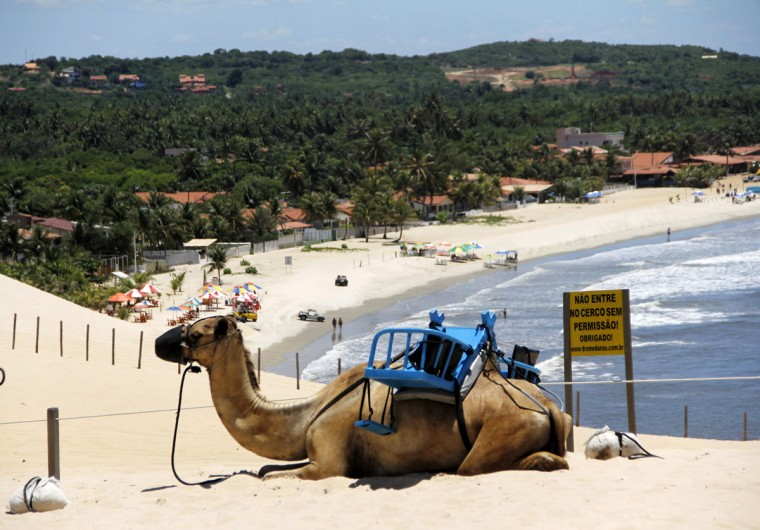A camel takes a rest at the Genipabu dunes in Natal, northeastern Brazil, March 27, 2014. Natal is one of the host cities for the 2014 World Cup tournament in Brazil. (REUTERS/Nuno Guimaraes)