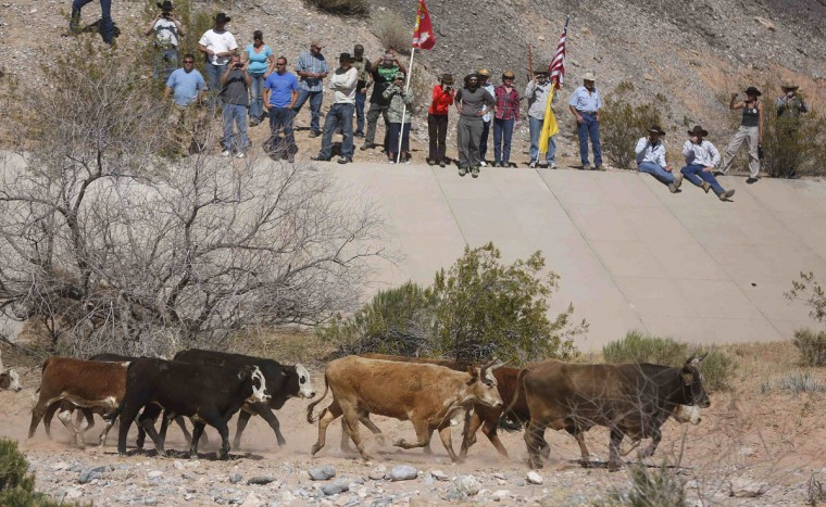 Protesters watch as cattle that belonged to rancher Cliven Bundy are released near Bunkerville, Nevada April 12, 2014. U.S. officials ended a stand-off with hundreds of armed protesters in the Nevada desert on Saturday, calling off the government's roundup of cattle it said were illegally grazing on federal land and giving about 300 animals back to rancher Bundy who owned them. (REUTERS/Jim Urquhart)
