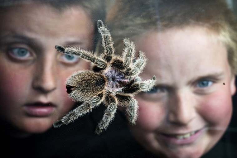 As long as a pet is adopted or rescued we will photograph it if there is something interesting about it. Wyatt Burrows wanted a tarantula. The Abingdon 10-year old (right) and his brother Raymond, 12, watch Wyatt's Chilean rose hair tarantula Fifi as it crawls around the tank in his room. Much of the time, when photographing a child's pet, I try to include the owner. I was not very far from Fifi, and the boys were close to the tank, so I used a smaller aperture to get them more in focus but not completely sharp. Nikon D800, 60mm f/2.8, ISO 2000, 1/30th at f/11. (Christopher T. Assaf/Baltimore Sun)
