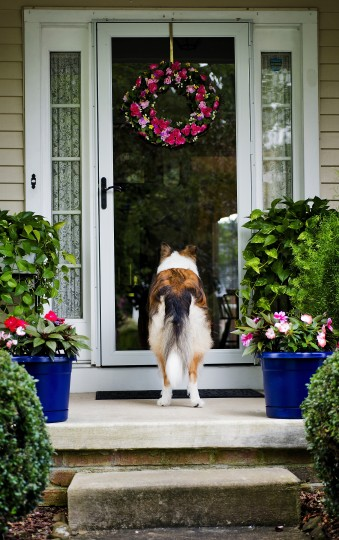 "And then there is Max, a 6- or 7-year-old Rough Collie, waiting for his owner Sue Roberts to return from inside her Bel Air home. ""He is so good with people, and loves everybody,"" Sue said. ""And he follows me everywhere."" this mean Max stares through the door, waiting patiently, as his owner slips briefly inside. Sometimes the different look makes it okay not to photograph the face, and to me anyone who has owned a pet can sense what is going on from this image. Debbie Brayek of Woodlawn loves Sir Crazy Ray, a small ferret notorious for stealing the insoles of shoes. With very little light, I got as much depth of field as I could to still hold the camera steady with a decent shutter speed, as any slower the movement of the critter would cause motion blur. I had Debbie hold him as I got in very close, almost nose to lens. Nikon D800, 60mm f/2.8, ISO 560, 1/400th at f/2.8. (Christopher T. Assaf/Baltimore Sun)"