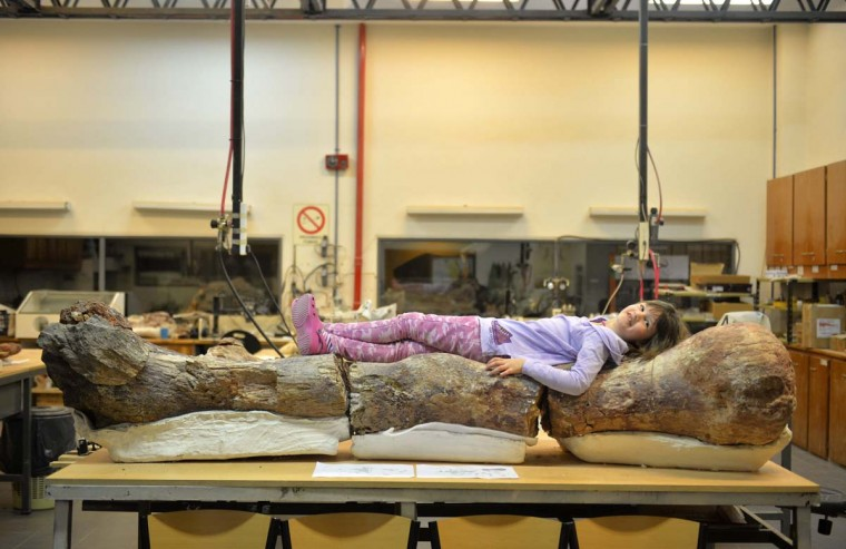 Marlene lies over the original fossilised femur of a dinosaur displayed on exhibition at the Egidio Feruglio Museum in the Argentina's Patagonian city of Trelew, May 18, 2014. According to the palaeontologists Jose Luis Carballido and Ruben Cuneo, the fossils are that of a sauropod and preliminary tests dates the fossils at some 90 million years old. The scientists said the dinosaur could be 130 feet long and 65 feet tall, and weigh at 85 tons, and it is a previously undiscovered species of titanosaur, an herbivore, which lived during the Late Cretaceous period. (Maxi Jonas/Reuters)