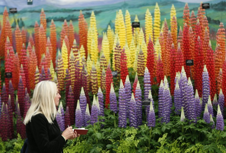 A visitor makes notes at a display of lupins during media day at the Chelsea Flower Show in London May 19, 2014. (Stefan Wermuth/Reuters)