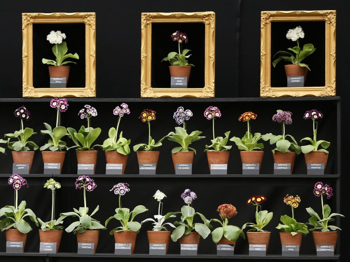 A floral display is seen at the Chelsea Flower Show in London May 19, 2014. (Stefan Wermuth/Reuters)