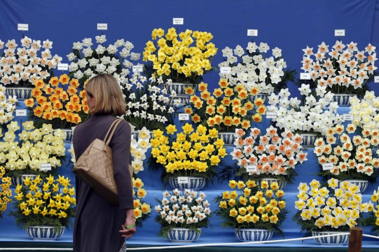 A woman looks at a display of flowers during media day at the Chelsea Flower Show in London May 19, 2014. (Stefan Wermuth/Reuters)