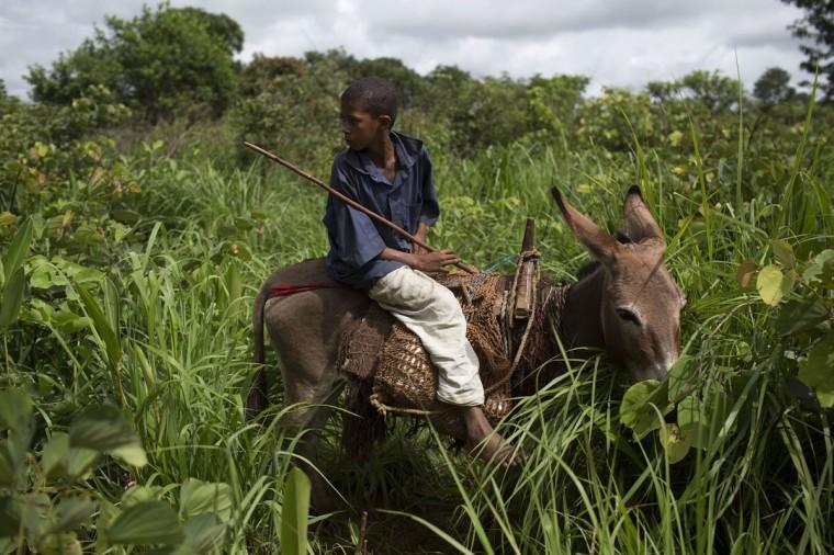 A Muslim boy rides a donkey on the outskirts of Bambari May 8, 2014. (REUTERS/Siegfried Modola)