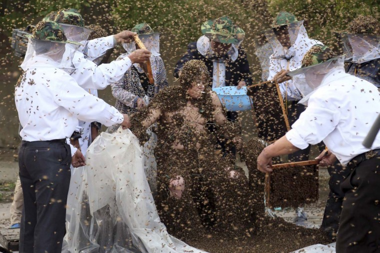 Gao Bingguo is covered with bees during an attempt to break the Guinness World Record for being covered by the largest number of bees, in Taian, Shandong province May 27, 2014. Gao set a new record after having had 326,000 bees on his body at one time, according to local media. (Reuters)