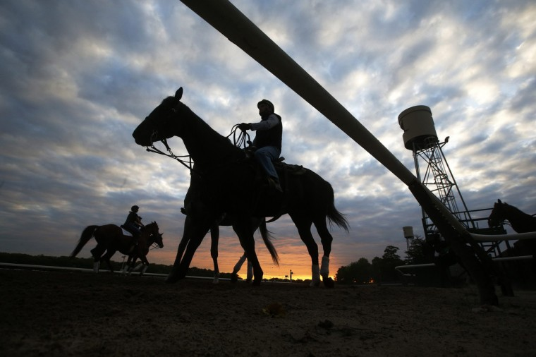 Horses are seen in silhouette making their way to the track for morning workouts at Belmont Park in Elmont, New York. The Belmont Stakes will be host to California Chrome as he competes for the coveted triple crown at Belmont Park on June 7, 2014. (Shannon Stapleton/Reuters)