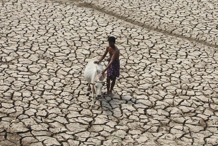 A villager along with his cow walks through a parched land of a dried pond on a hot day on the outskirts of Bhubaneswar in the eastern Indian state of Odisha on May 2.  || PHOTO CREDIT: STRINGER  - REUTERS