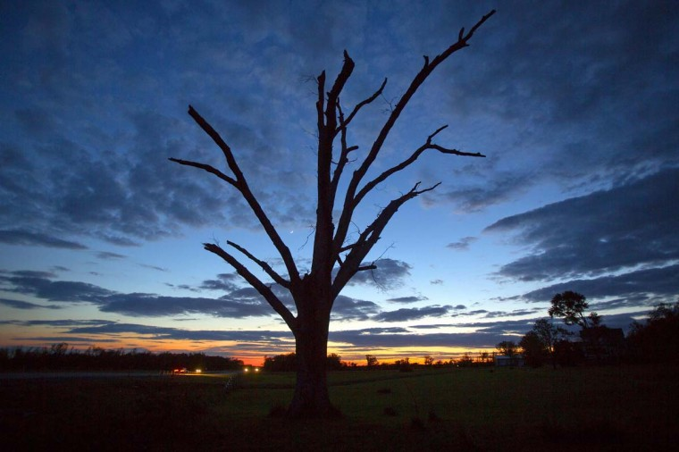 An oak tree that has lost all its leaves and most of its branches from a tornado is pictured at sunset near Vilonia, Arkansas May 1. Flood warnings were posted across the eastern United States on Thursday after a powerful storm system unleashed record amounts of rain from New England to Florida. The remnants of the storm that dumped up to 11 inches of rain in the Florida Panhandle on Wednesday had moved into the Atlantic Ocean by early Thursday, said Dan Petersen, a National Weather Service meteorologist.  || PHOTO CREDIT: CARLO ALLEGRI  - REUTERS