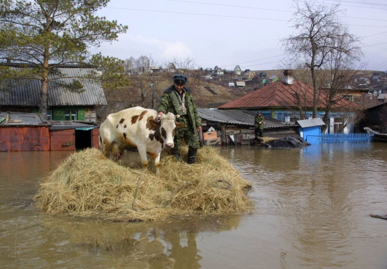 An emergency worker rescues a cow trapped in the flooded village of Smirnovka in Russia's Kemerovo region in Siberia, on April 17, 2004. About 2,300 houses in the region remain flooded and 1,500 people evacuated, Russian Interfax agency said on Sunday. (REUTERS/Sergei Gavrilenko)