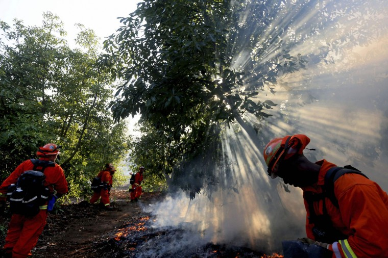A prison crew battles a fire in an avocado grove outside Fallbrook, California May 14, 2014. More than 20 structures, including several homes, burned to the ground and thousands of people were ordered to evacuate on Wednesday, as a wind-lashed wildfire roared out of control in the heart of a Southern California coastal community. The so-called Poinsettia Fire, which erupted shortly before 11 a.m. in Carlsbad, some 25 miles north of San Diego, quickly became the most pressing battle for crews fighting flames across the region amid soaring temperatures and hot Santa Ana winds. (REUTERS/Sandy Huffaker)