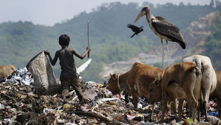 A Greater Adjutant Stork stands as a rag-picker collects recyclables at the biggest garbage dump in the northeastern state of Assam on the eve of World Environment Day at the Boragoan area in Guwahati. The UN declared the 2014 theme for World Environment Day to be 'Small Islands and Climate Change' with the official slogan for the year 2014 'Raise Your Voice Not The Sea Level'. (Biju Boro/Getty Images)