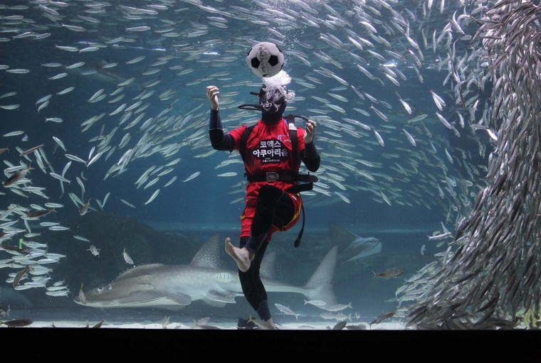 A South Korean diver clads in soccer uniform swims with sardines for South Korean team's success in the 2014 FIFA World Cup Brazil at the Coex Aquarium on June 9, 2014 in Seoul, South Korea. The 2014 FIFA World Cup Brazil begins on June 12, 2014. (Chung Sung-Jun/Getty Images)