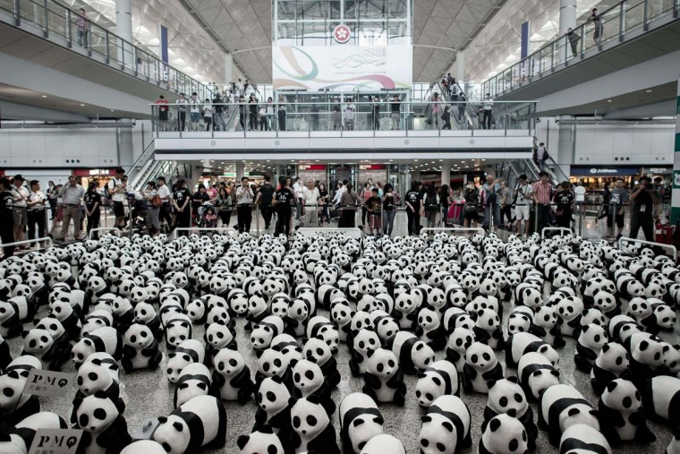 Some of the 1,600 papier-mache pandas are seen displayed at Hong Kong's international airport on June 9, 2014 as part of their first appearance in the city. The event, consisting of placing 1,600 papier-mache pandas in various cities around the world, was created by French artist Paulo Grangeon in collaboration with the WWF and is aimed at raising awareness of the endangered species. (Philippe Lopez/AFP/Getty Images)