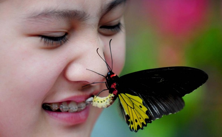 """This picture taken on June 28, 2014 shows a butterfly on a tourist's face in the """"butterfly valley"""" in Shenyang, northeast China's Liaoning province. The butterfly valley, with a collection of some 400 butterflies from more than 20 species, opened to the public on June 28, local media reported. (AFP/Getty Images)"""