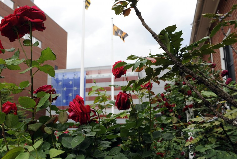 Roses grow in a small garden in front of Flag House with the Star Spangled Banner Museum in the background. (Barbara Haddock Taylor/Baltimore Sun)