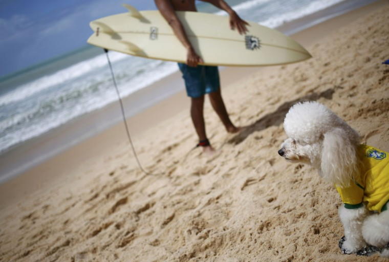 A poodle wearing a Brazilian national soccer team shirt sits on the beach of Porta Negra prior to the World Cup 2014 soccer match between Japan and Greece in Natal June 19, 2014. (Kai Pfaffenbach/Reuters)
