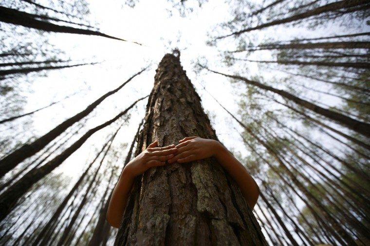 A boy hugs a tree as he prepares to take part in an attempt to break the Guinness World Record for the most number of people hugging trees for two minutes in Kathmandu June 5, 2014. According to the event organizer, 2,001 people took part in the event, held on World Environment Day, to spread the message of saving the environment. (Navesh Chitrakar/Reuters)