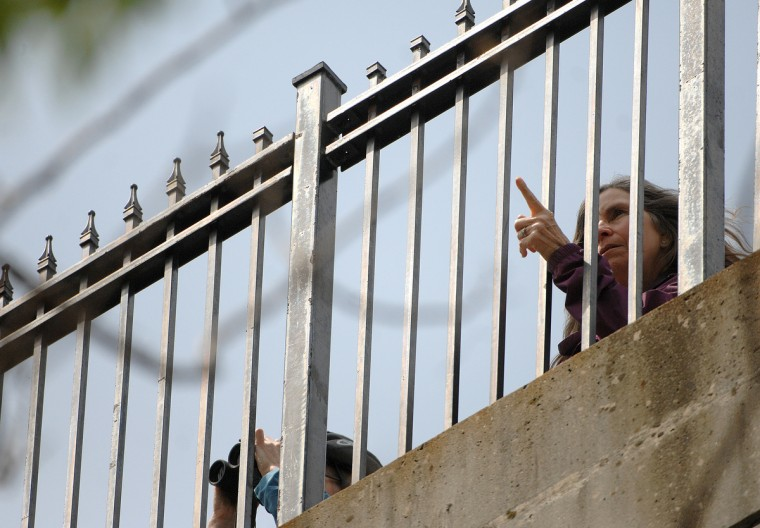 Birders watch the colony from the Wyman Park Drive bridge. (Jerry Jackson/Baltimore Sun)