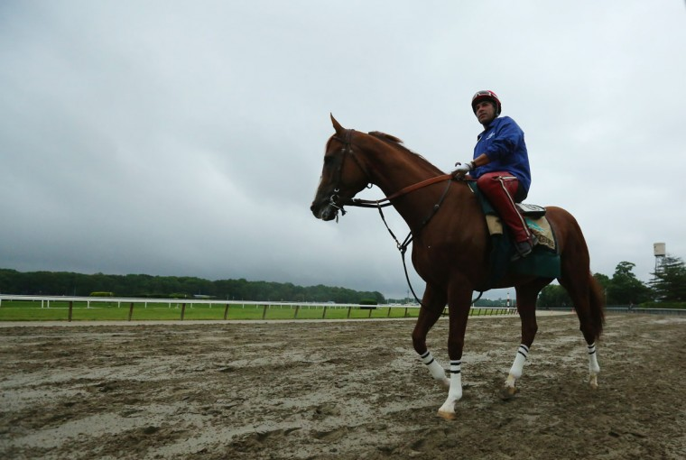 Kentucky Derby and Preakness winner California Chrome, with exercise rider Willie Delgado up, trains on the main track at Belmont Park on June 5, 2014 in Elmont, New York He is scheduled to race for the Triple Crown in the 146th running of the Belmont Stakes (Photo by Al Bello/Getty Images)