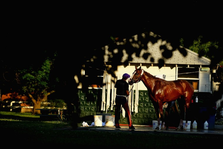 Kentucky Derby and Preakness winner California Chrome, with exercise rider Willie Delgado is bathed outside his barn after a training session at Belmont Park on May 27, 2014 in Elmont, New York. He is scheduled to race for the Triple Crown in the 146th running of the Belmont Stakes (Photo by Al Bello/Getty Images)