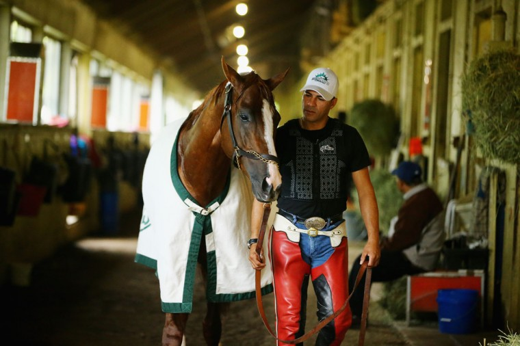 Kentucky Derby and Preakness winner California Chrome, with exercise rider Willie Delgado is walked in his barn after training on the main track at Belmont Park on May 30, 2014 in Elmont, New York. He is scheduled to race for the Triple Crown in the 146th running of the Belmont Stakes (Photo by Al Bello/Getty Images)
