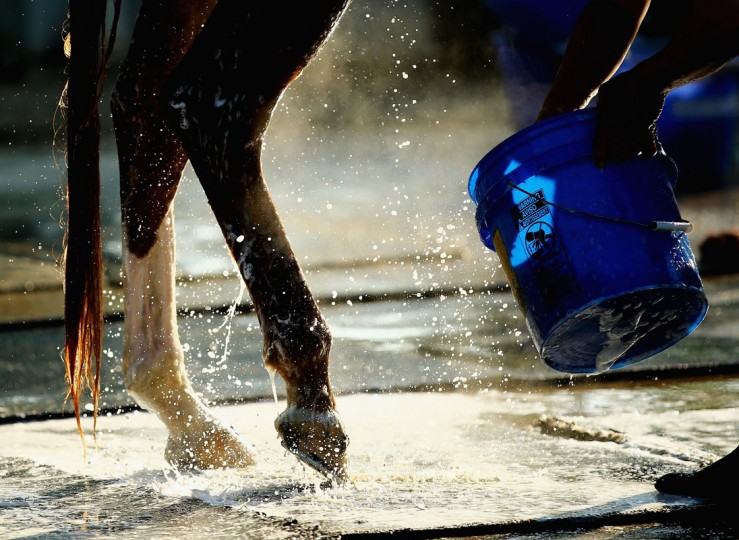 A general view of a horse getting bathed at Belmont Park on June 3, 2014 in Elmont, New York. (Photo by Al Bello/Getty Images)