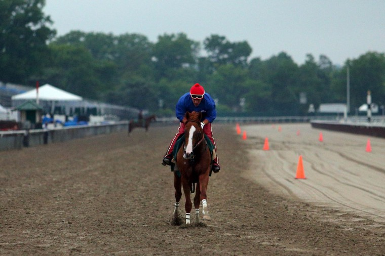 California Chrome works out on the track in preparation for running in the Belmont Stakes at Belmont Park. (Brad Penner-USA TODAY Sports)