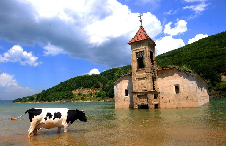 A cow walks through water in front of the partially-submerged church of Saint Nicholas in Mavrovo Lake, some 100 km west from Skopje. The church of St Nicholas was intentionally flooded in 1957 during the creation of an artificial lake designed to supply water to a local power plant. (Robert AtanasovskiAFP-Getty Images)