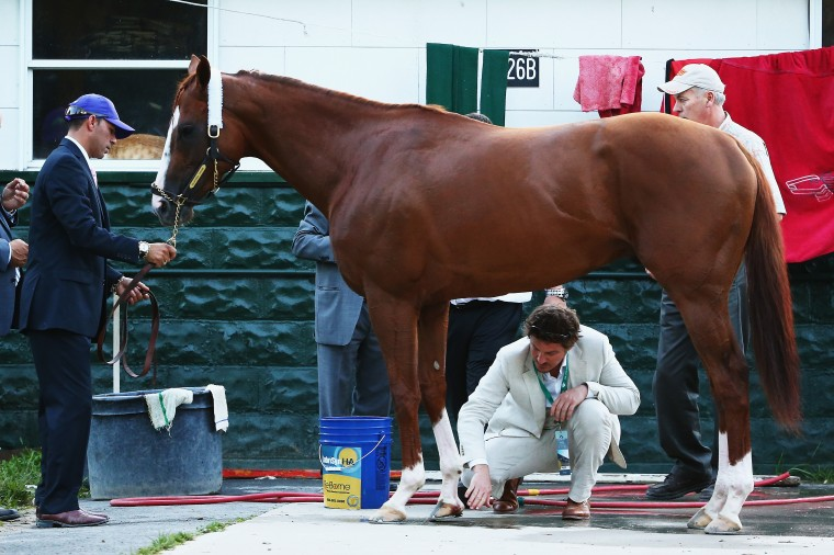 An injury to California Chrome's right front hoof is tended to in the barn after the 146th running of the Belmont Stakes at Belmont Park Elmont, N.Y. (Streeter Lecka/Getty Images)
