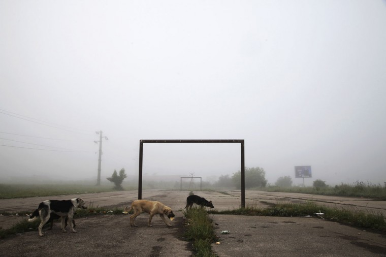 Dogs walk past a goalpost on a foggy morning in the town of Lipljan, Kosovo on June 3, 2014. (REUTERS/Hazir Reka)
