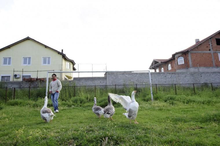 A man walks a flock of geese past a soccer goalpost in Shuto Orizari, a shantytown near the capital Skopje in Macedonia on June 4, 2014. (REUTERS/Ognen Teofilovski)