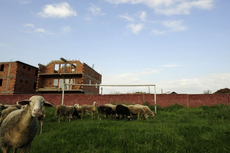 Sheep graze in front of a soccer goalpost in Shuto Orizari, a shantytown near the capital Skopje, Macedonia on June 4, 2014. (REUTERS/Ognen Teofilovski)